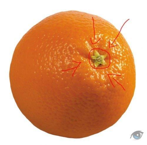 как узнать сколько долек в апельсине